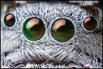 Image chauve-souris photo chauve-souris